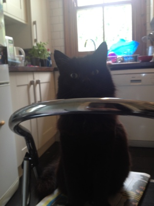 Johnny the cat is surprised at my use of chickpeas